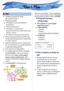 Dna e Rna- odontogenética