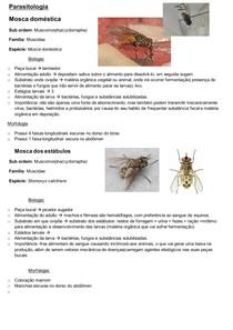 Moscas e mosquitos