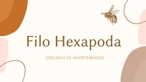 Filo Hexapoda - Resumo