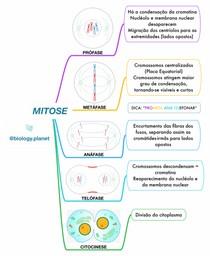 Mapa Mental Mitose (Fases)