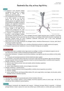 Anatomia das vias aéreas inferiores