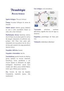 Resumo - Parasitologia - Thricuris trichiura