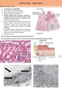 Histologia Renal- Túbulos- RESUMO