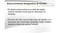 Neurobiologia #11 - Desenvolvimento Ontogenético do Cérebro