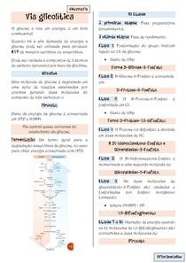 Via glicolitica - Glicólise - Bioquimica