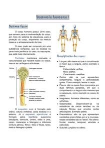 Anatomia I - Sistema Ósseo