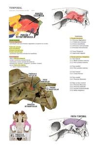 OSTEOLOGIA VETERINÁRIA - OSSO TEMPORAL