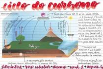 Ciclo do Carbono - Ficha - @matsumurastudies
