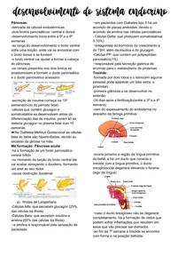 Desenvolvimento do Sistema Endócrino