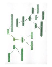 Mapa Mental de Biologia - Fotossíntese