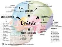Mapa mental crânio
