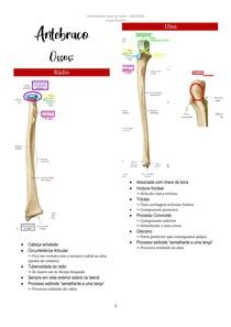 Membro Superior - Antebraço e Mão