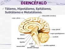 Anatomia Clínica III