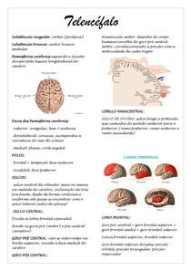 Resumo Telencéfalo