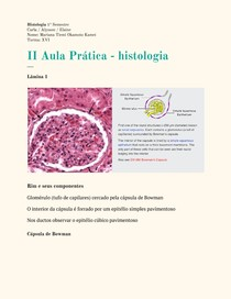 Lâminas de histologia