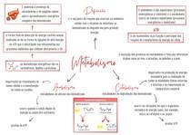 Bioenergética - Mapa Mental
