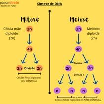 Processo de divisão da mitose e meiose.