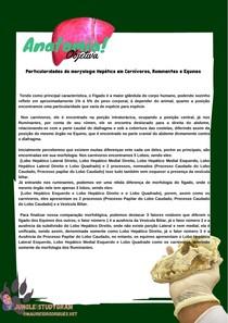 Particularidades da morfologia Hepática em Carnívoros, Ruminantes e Equinos