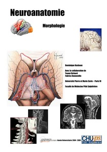 Neuro Anatomie Neuroanatomia 4