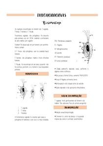 resumo - trichomonas