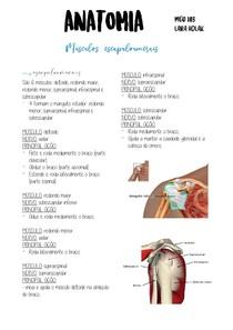 músculos escapuloumerais