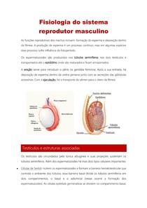 Fisiologia do sistema reprodutor masculino (1)