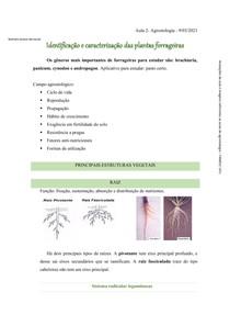 Identificação e Caracterização das Plantas Forrageiras