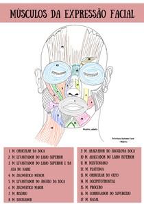 Músculos da Expressão da Face