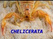 02_Chelicerata 2014