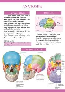 Anatomia - Crânio