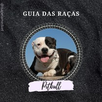 Guia de raças - Pitbull