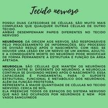 GRUPO CÉLULAS NERVOSAS