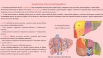 A divisão funcional se dá em 8 segmentos, cada um suprido por uma única tríade portal, composta_ uma veia porta, artéria hepática e ducto biliar A divisão funcional do fígado A cissura principal (linh