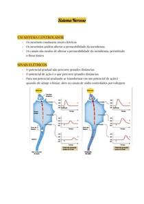 Sistema Nervoso (4)
