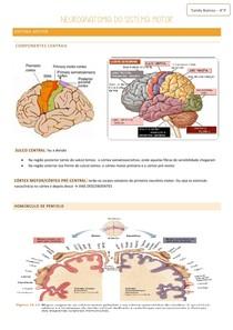 neuroanatomia do sistema motor