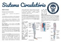 Sistema circulatorio pt 7: MMII