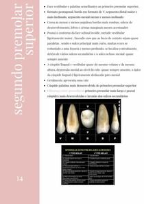 Anatomia do segundo premolar superior