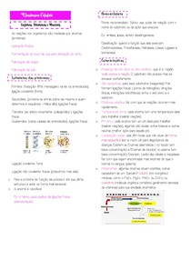 Enzimas, Vitaminas e Minerais