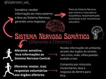 Sistema Nervoso Somático