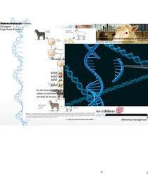 Apresentação de Engenharia Genética