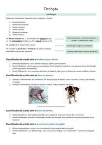 Anatomia do dente, classificações e exemplos - Medicina Veterinária