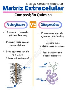 Matriz Extracelular: Proteoglicanos Vs Glicoproteínas