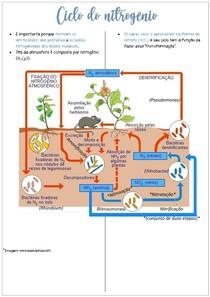 Ciclo do nitrogênio