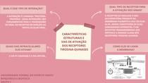 Características estruturais e vias de ativação dos receptores tirosina-quinases