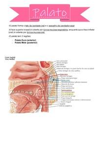 Resumo - Palatos Duro e Mole