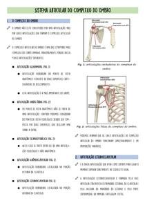 Sistema Articular do Complexo do Ombro