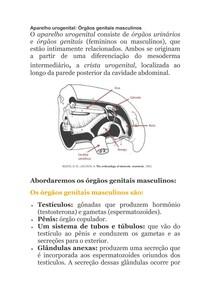 2 - 4 Aparelho urogenital Masculino Fausto