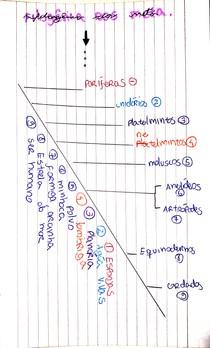 Filogênia dos metazoários (RESUMO - PARTE 2)