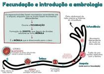 Embriologia da hipófise e do sistema reprodutivo de machos e fêmeas