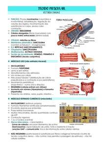 TECIDO MUSCULAR (liso, esquelético e cardíaco) E CONTRAÇÃO MUSCULAR
